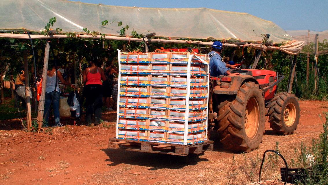 Emergenza Covid-19: Ismea rilancia la cambiale agraria