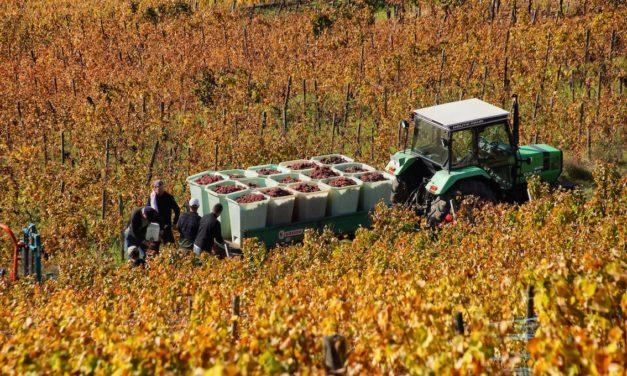 Agricoltura: con i voucher 50mila cassintegrati nei campi