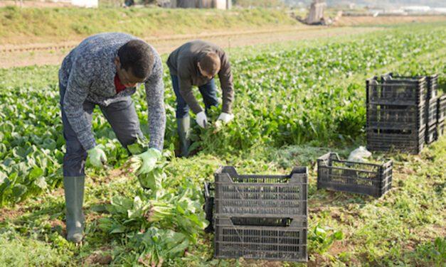 Raccolti a rischio nei campi italiani per mancanza di manodopera, straniera e italiana