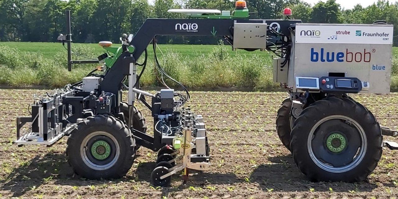 Naïo Technologies e Strube D&S: BlueBob, il robot per il diserbo meccanico della barbabietola