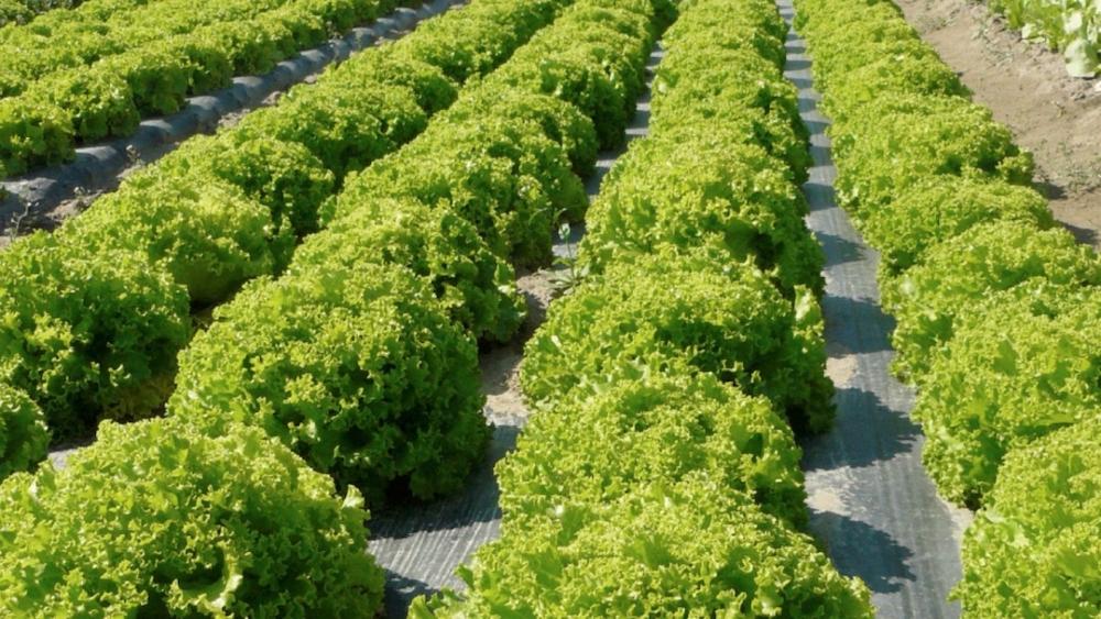 Agricoltura G20: arriva il piano Coldiretti-Novamont per l'Agricoltura 4.0